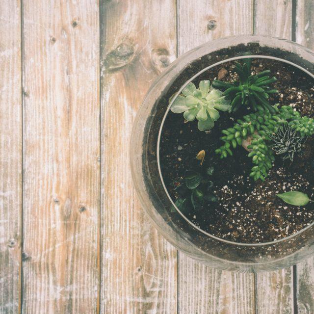 [Zelena radionica] Kako napraviti zeleni svijet u malom