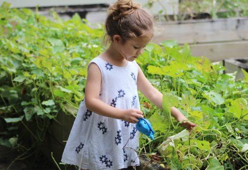 Knjižnice i dječje vrtlarstvo: priča koja (počinje) rast