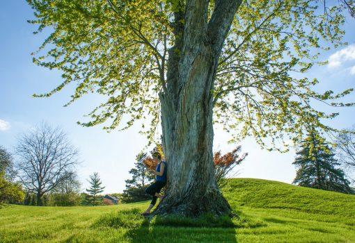 """Prvo """"Čitanje ispod krošnji stabala"""""""