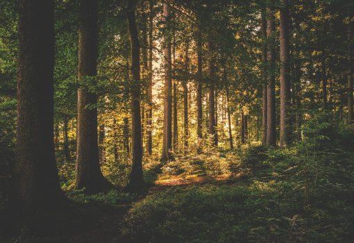 Deforestacija i važnost pošumljavanja
