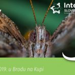 Noć leptira – edukativni program u Brodu na Kupi