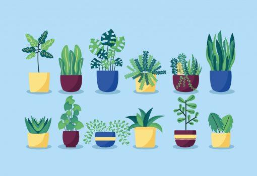 """Prvi """"hotel"""" za biljke u Rijeci"""
