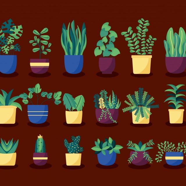 Nastavlja se ciklus vikend radionica o njezi bilja u sklopu projekta Biljkoteka