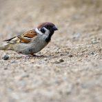 Predavanje za osnovnoškolce – Kako djeca mogu pomoći pticama u gradu?