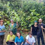 Zapuštenu zelenu površinu pretvaramo u vrt s mediteranskim voćkama