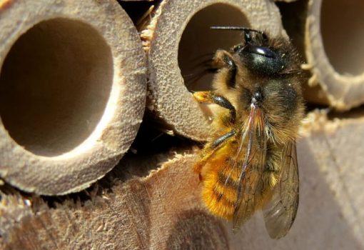 Radionica izrade hotela za pčele i predavanje o kućnom kompostiranju