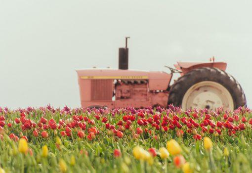 Europska prijestolnica kulture potiče bioraznolikost sadnjom 50 tisuća lukovica nizozemskog cvijeća
