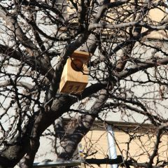 U centru grada postavljene kućice za ptice